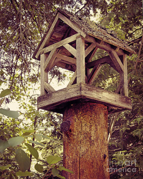 Wall Art - Photograph - Bird House by Emily Kelley
