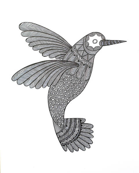 Adult Drawing - Bird Hummingbird by MGL Meiklejohn Graphics Licensing