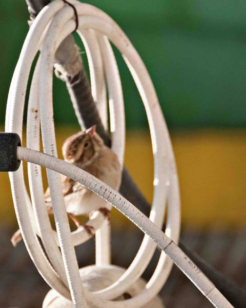 Wall Art - Photograph - Bird In A Coil Of Tubing by Bill Perry
