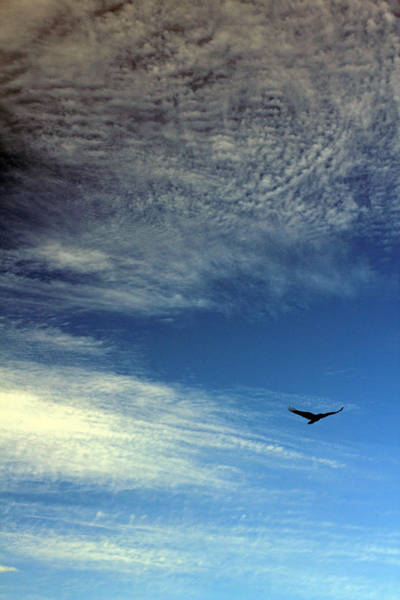 Photograph - Bird In Flight by Jennifer Robin