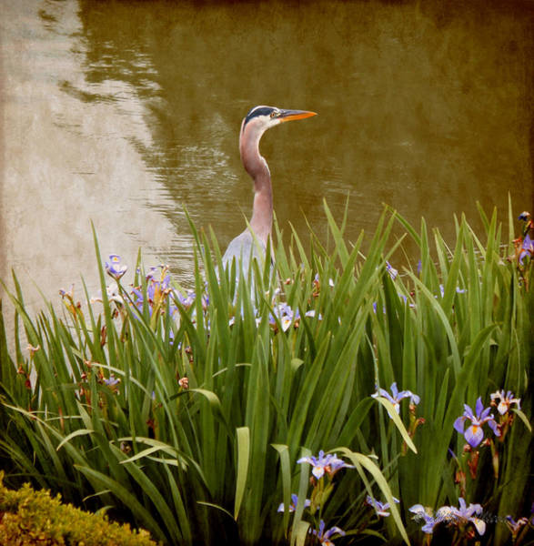 Photograph - Bird In The Water by Milena Ilieva