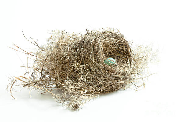 Bird Nest 1 Art Print