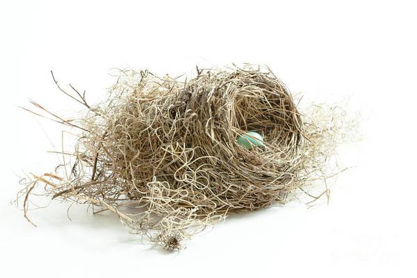 Photograph - Bird Nest 1 by Jo Ann Tomaselli