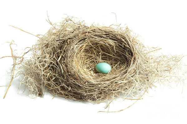 Bird Nest 2 Art Print