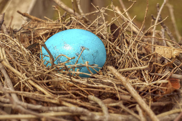 Photograph - Bird Nest Easter Egg Basket by Jason Politte