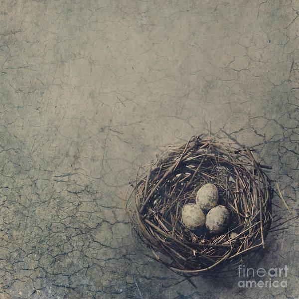 Egg Digital Art - Bird Nest by Jelena Jovanovic