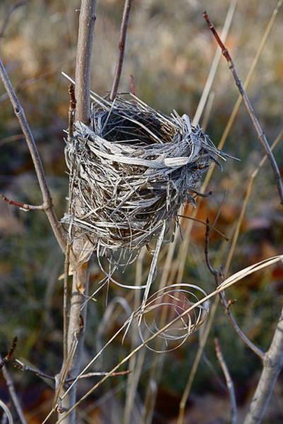 Empty Nest Wall Art - Photograph - Bird Nest by Jon Reddin Photography