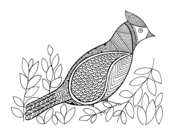 Wall Art - Drawing - Bird North Cardinal by MGL Meiklejohn Graphics Licensing