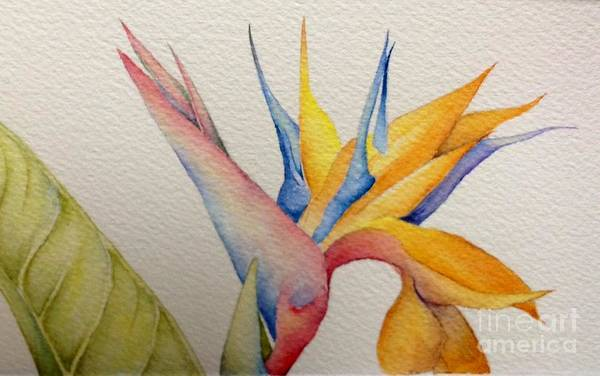 Wall Art - Painting - Bird Of Paradise by Alison Harvey