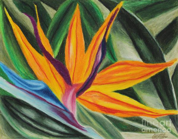 Painting - Bird Of Paradise by Annette M Stevenson