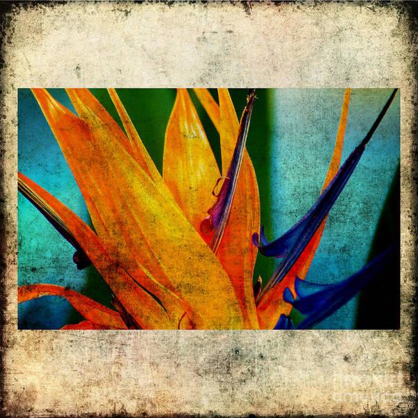 Photograph - Bird Of Paradise Flower 1 by Susanne Van Hulst