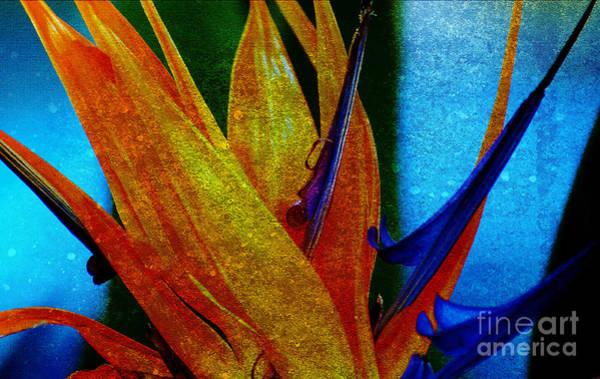 Photograph - Bird Of Paradise Flower 2 by Susanne Van Hulst