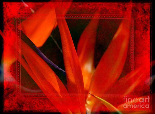 Photograph - Bird Of Paradise Flower 5 by Susanne Van Hulst