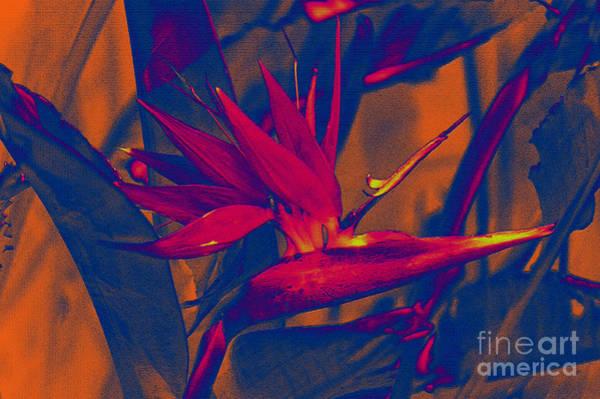 Photograph - Bird Of Paradise Flower by Susanne Van Hulst
