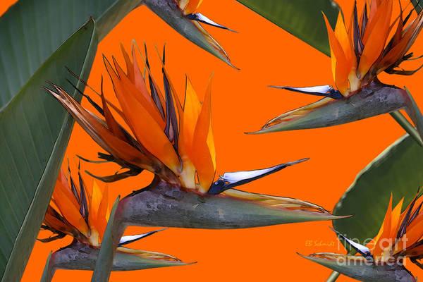Digital Art - Bird Of Paradise Gathering by E B Schmidt