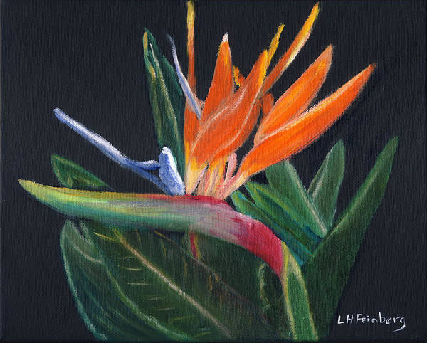 Painting - Bird Of Paradise In Oil by Linda Feinberg