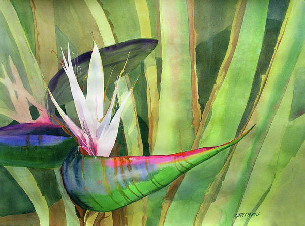 Bird Of Paradise Painting - Bird Of Paradise by Kris Parins
