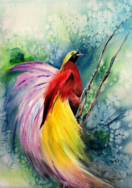 Exotic Drawing - Bird Of Paradise New-guinea by Isabel Salvador