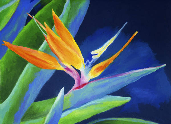 Tropical Flower Painting - Bird Of Paradise by Stephen Anderson