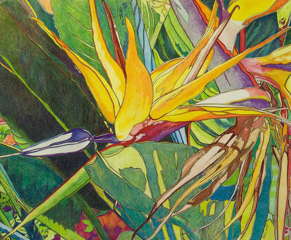 Drawing - Bird Of Paradise  by Terry Holliday