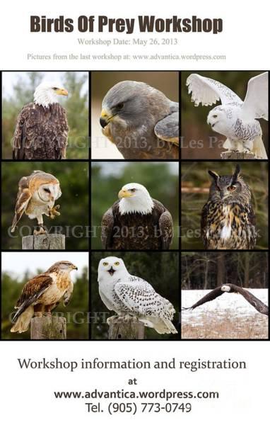 Photograph - Bird Of Prey Workshop by Les Palenik