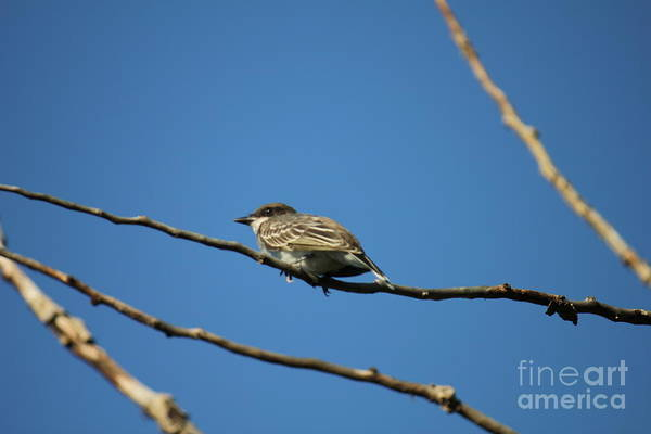 Photograph - The Bird's Eye by Donna L Munro