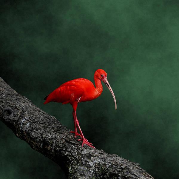 Photograph - Bird On A Catwalk by © Debi Dalio