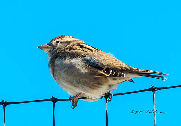 Photograph - Bird On A Wire by Edward Peterson