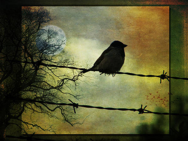 Leonard Photograph - Bird On A Wire by Marie Gale