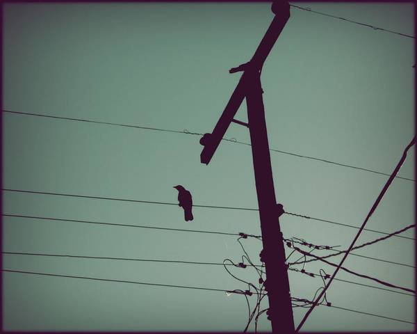Photograph - Bird On A Wire by Patricia Strand