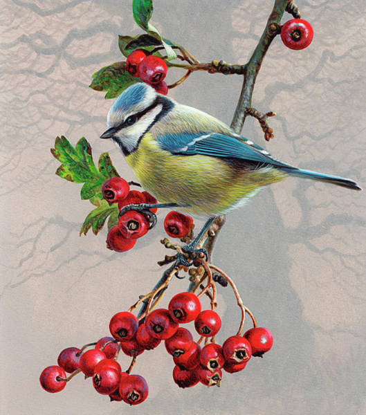 Bird Watching Digital Art - Bird On Branch With Berries, Blue Tit by Andrew Hutchinson