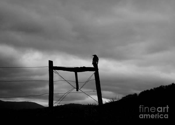 Fence Post Digital Art - Bird On Fence II by Nancy Mueller