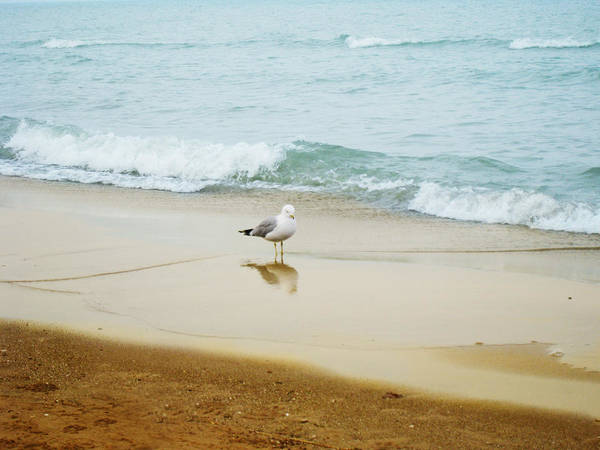 Photograph - Bird On The Beach by Milena Ilieva