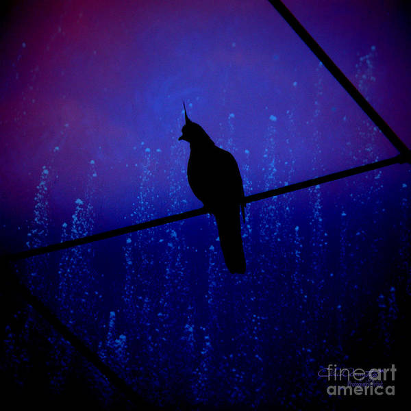 Photograph - Bird On The Wire ... by Chris Armytage
