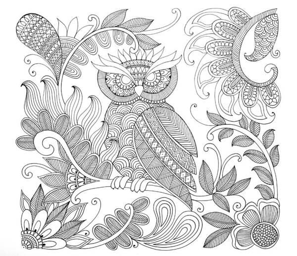 Wall Art - Drawing - Bird Owl by MGL Meiklejohn Graphics Licensing