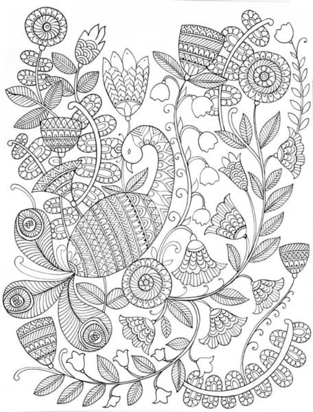 Peacock Drawing - Bird Peacock 9 by MGL Meiklejohn Graphics Licensing