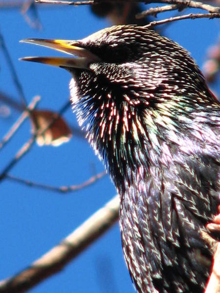 Photograph - Bird Talk by Cleaster Cotton