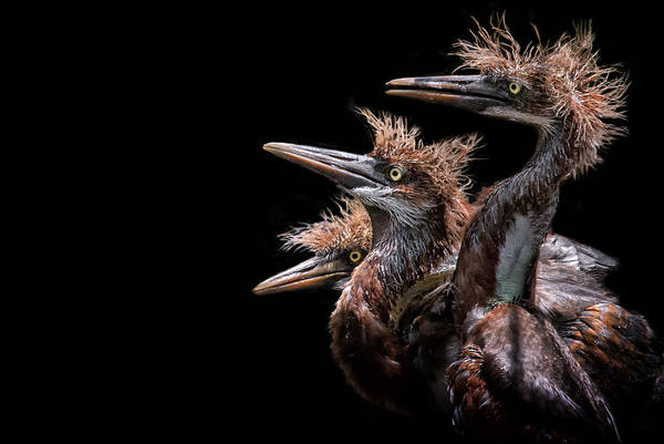 Photograph - Bird Talk by Ghostwinds Photography