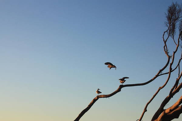Photograph - Bird Trio by Daniel Schubarth