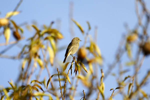 Photograph - Bird Watcher by Goyo Ambrosio