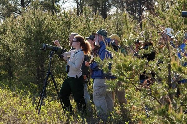 Bird Watcher Photograph - Bird Watchers by Jim West