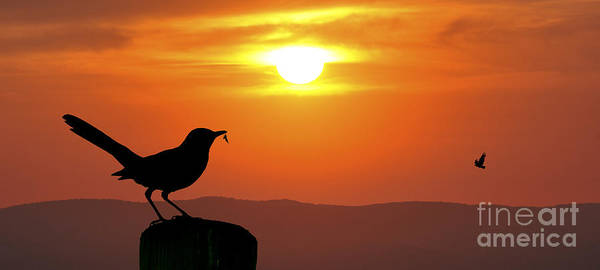 Photograph - Bird With Insect Sunset Panoramic by Dan Friend