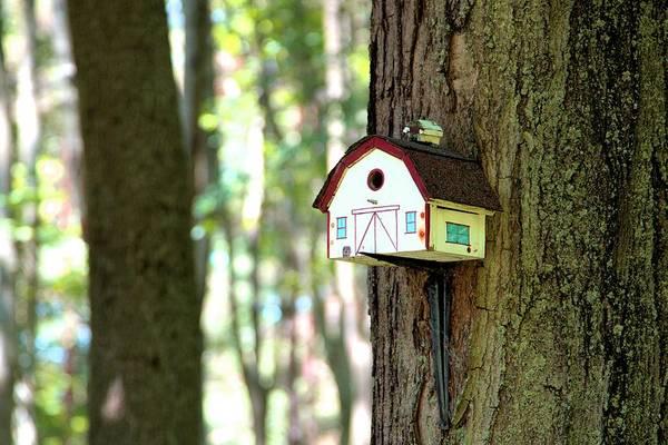Photograph - Birdhouse Barn by Gordon Elwell