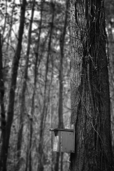 Photograph - Birdhouse by George Taylor