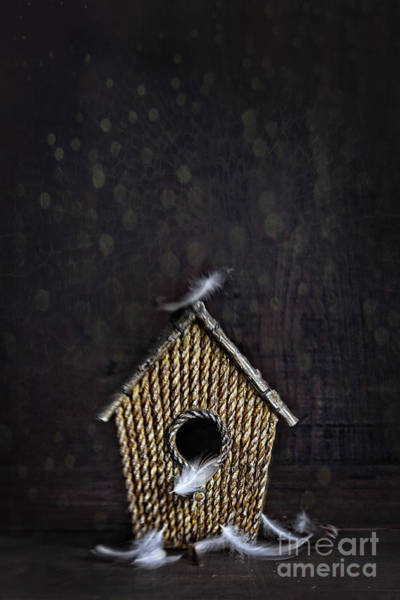 Photograph - Birdhouse With Feathers On Wood by Sandra Cunningham