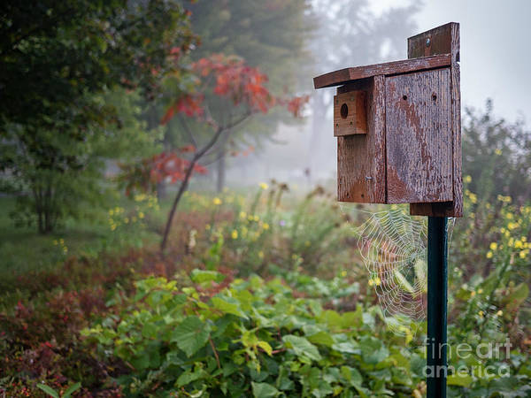 Photograph - Birdhouse With Spider Web by Kari Yearous