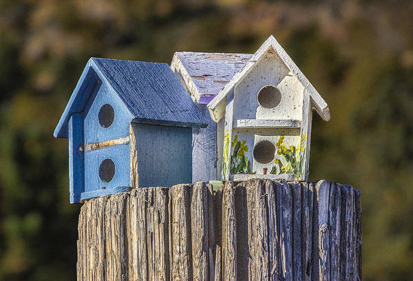 Digital Art - Birdhouses by Photographic Art by Russel Ray Photos