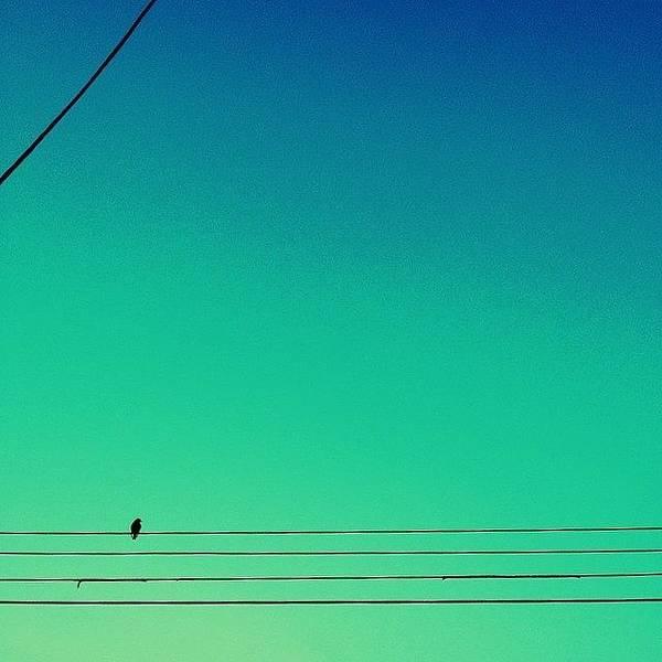 Minimalism Photograph - Bird On A Wire by Merideth Bray