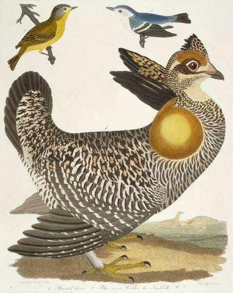 Wall Art - Painting - Birds  by Alexander Wilson
