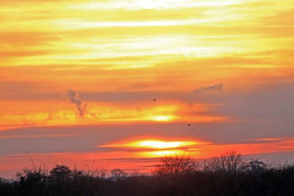Photograph - Birds Against Setting Sun by Tony Murtagh